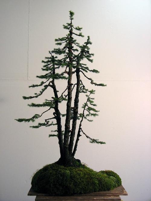 sprucefinal1