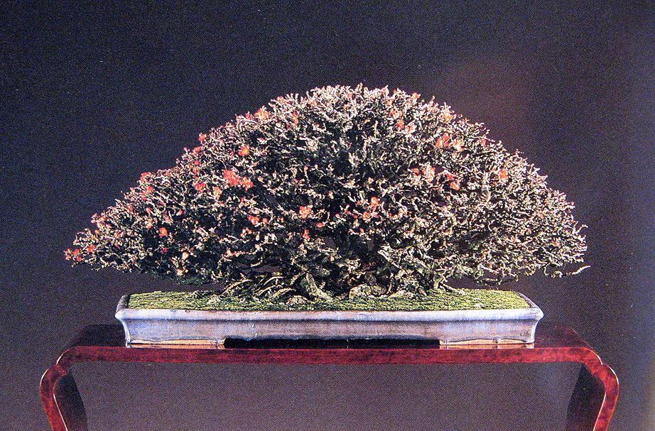 Chojubai Quince Diminutive Jewels Michael Hagedorn