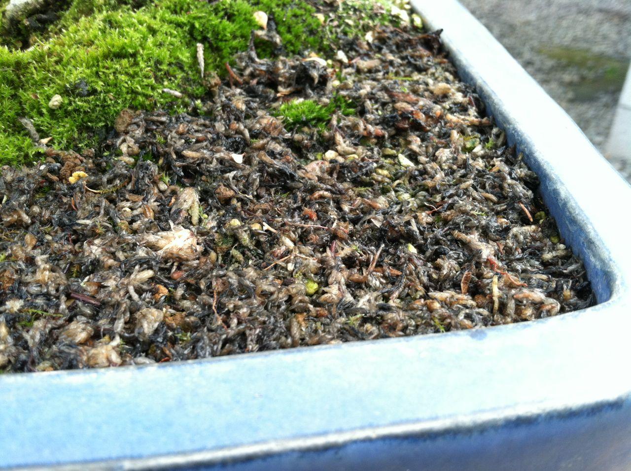 The Moss Myth Michael Hagedorn