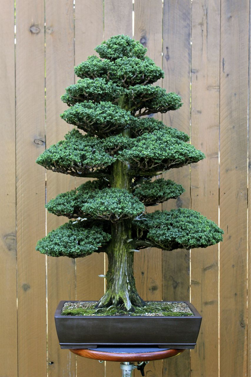 Image Result For How Much Juniper
