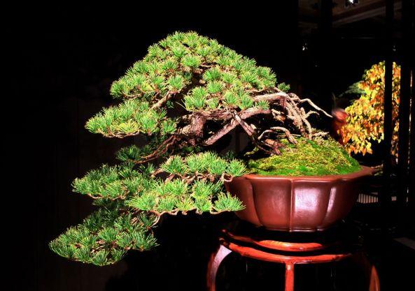 Konnor Pine Artisans Cup