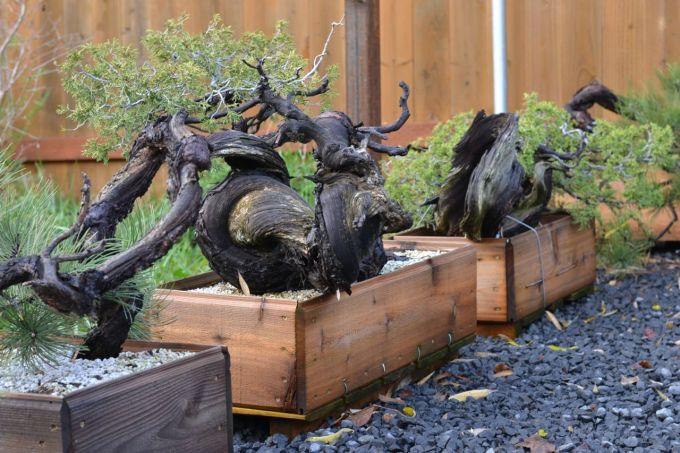 New Projects From Backcountry Bonsai-