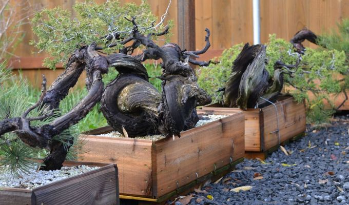 New Projects From BackcountryBonsai-