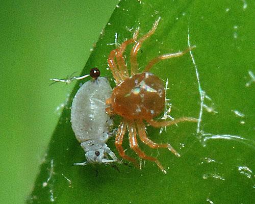 Green ideas for pestcontrol?
