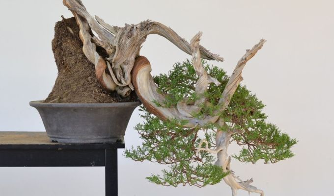 Revisiting a Cascade Juniper-
