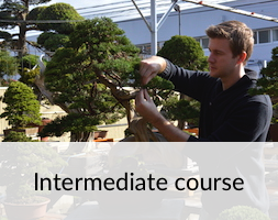 bonsai-intermediate-course.JPG