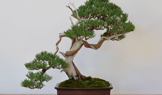 Tree Prep for the NationalShow-