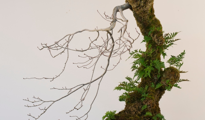 Vine Maple… Tower… Experiment?