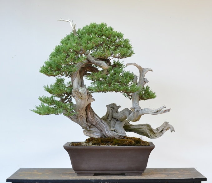 Special Rocky Mountain Juniper Styling-