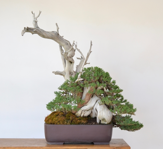 Front Renewed…A Rocky Mountain Juniper Gets aMakeover-