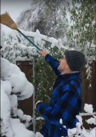 Snow Care for Bonsai-
