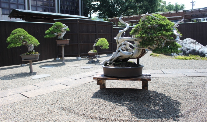 Bonsai Fundamentals Course—Now Available for Viewing-