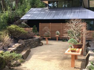 A New Public Bonsai Display: Portland Japanese Garden