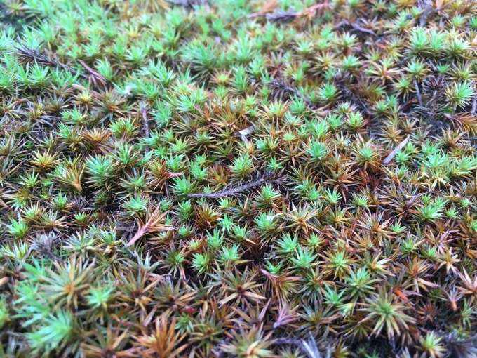 A Few Thoughts on Moss Gardens for Bonsai Folks-