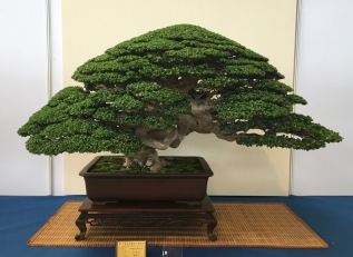 Impressions from the BCI / Asia-Pacific / HWA-FONG / 1st Bonsai Science Symposium