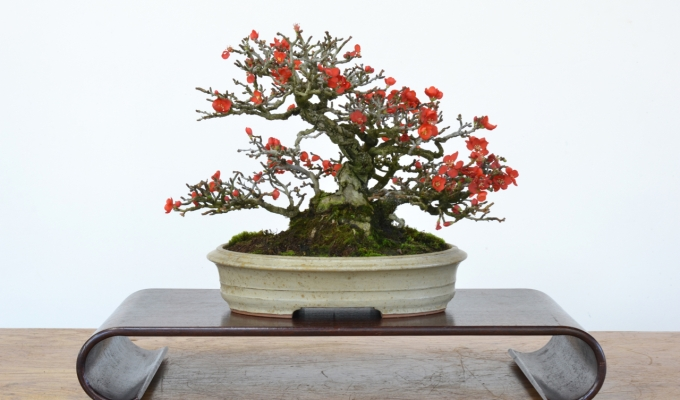 Colorful Long-Term Bonsai Projects-