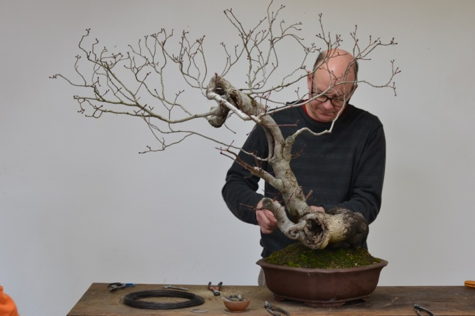 Student Work at Crataegus Bonsai-