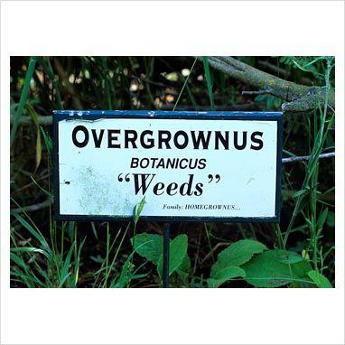 Of Weeds andLove