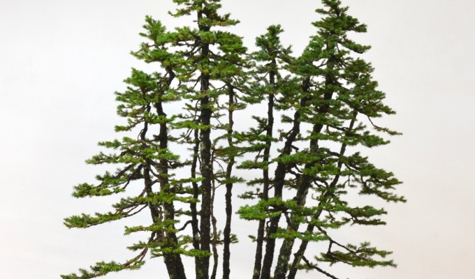 Spruce Forest TimeLapse–