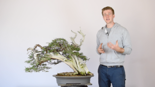 Review: Bonsai Empire Advanced Bonsai Course2