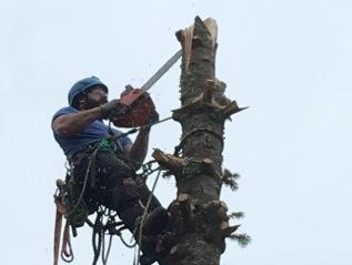 A Wildlife Tree Snag GetsMade—