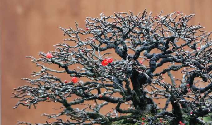 Focus on Fall Pruning:Chojubai