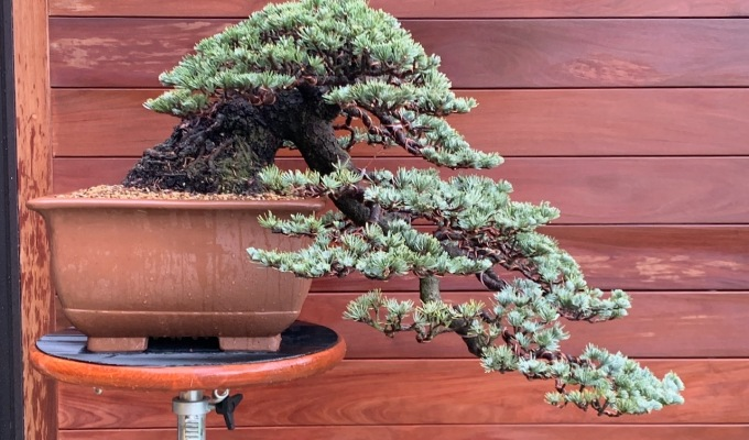 Calling Jim Gremel—Your Cedar is Ready