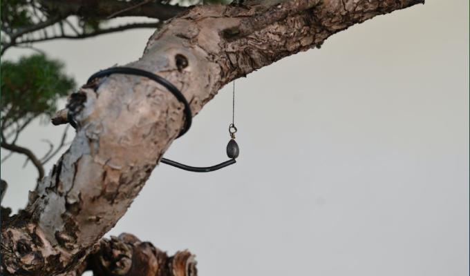 Repotting Trick: The PlumbBob