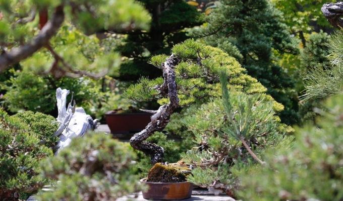 Crataegus Bonsai Garden inPhotos