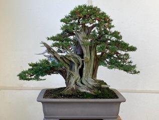 Progression Trees-